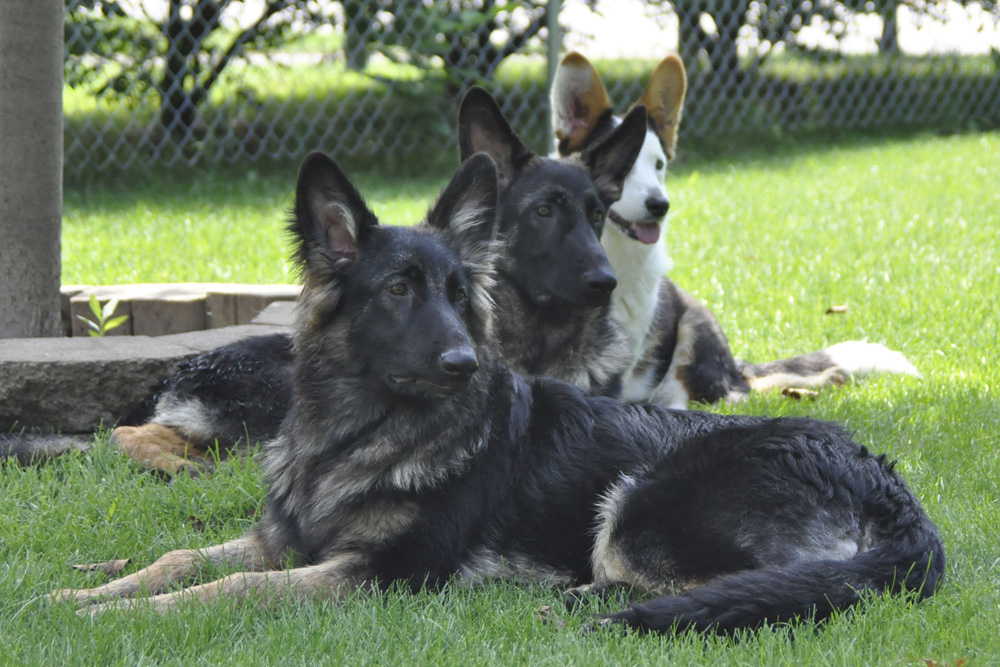 Photo of three dogs